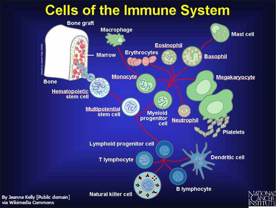 Understanding Immune Checkpoint Pathways to Improve Patient Response