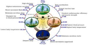 Human_circadian_biology