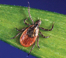 New Hope for Lyme Disease Prevention
