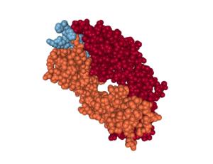 Abeta-antibody_crystal