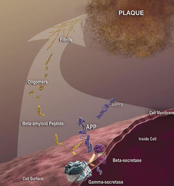 Targeting Pyroglutamate Aβ in Alzheimer's Disease