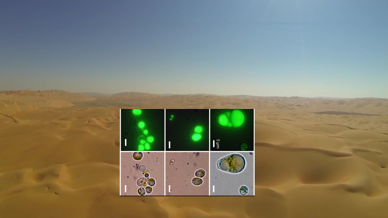 algae_in_desert