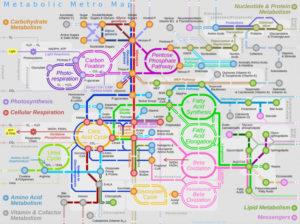 metabolism_map