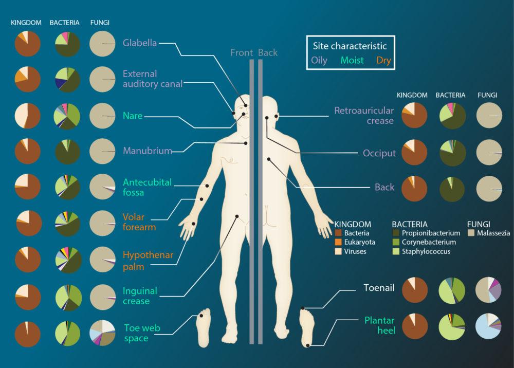 Skin Microbiome | BioSerendipity