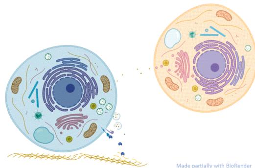 kinase_secretion