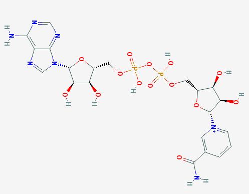 nicotinamide_adenine_dinucleotide
